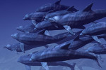 cooperar delfines